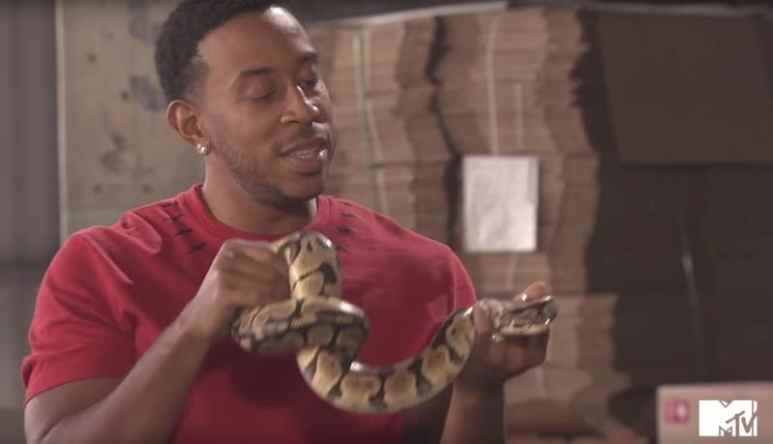 Ludacris holding a striped snake