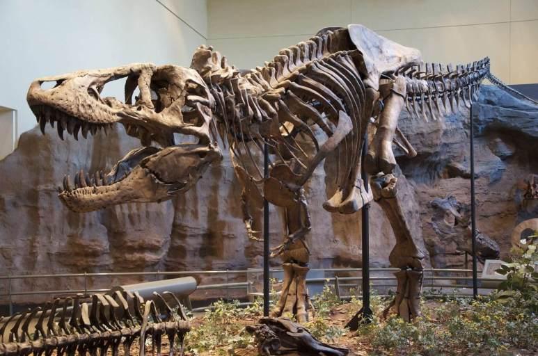 Tyrannosaurus Rex reassembled fossil