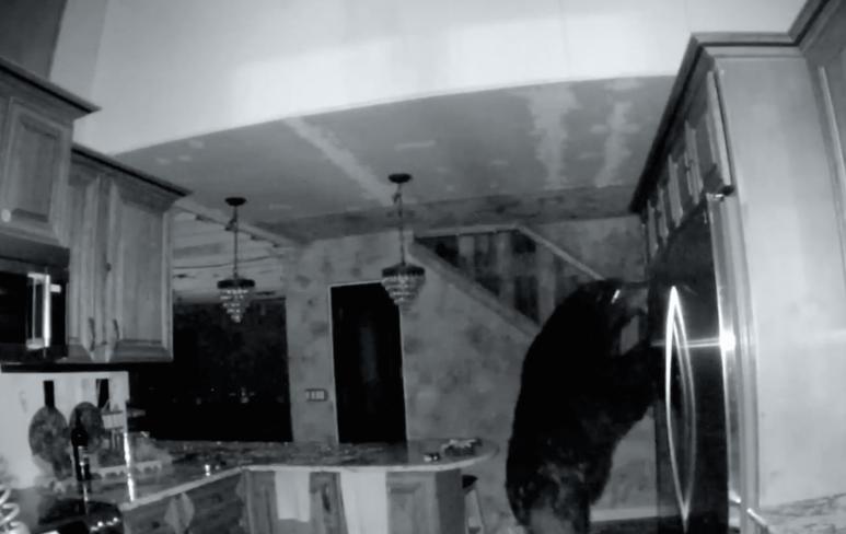 Bear invades a cabin