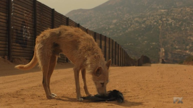 Still image of the stray dog from Mayans M.C. Perro/Oc
