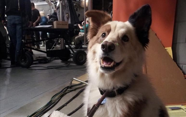 Kuma as Stan on The Dog With A Blog set