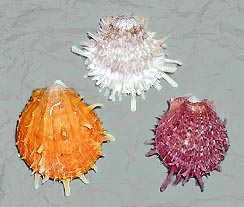 Monsterslayer Com Spiny Oyster Shell Beads