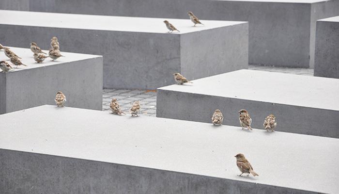 Que-ver-Berlin-Monumento-al-Holocausto