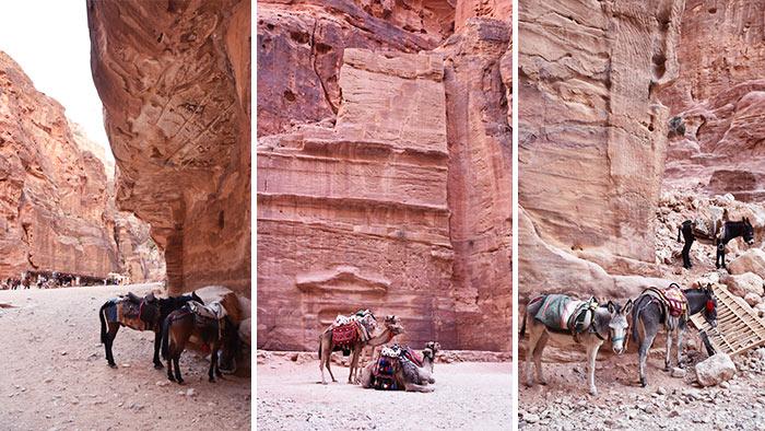 Que-ver-Petra-animales