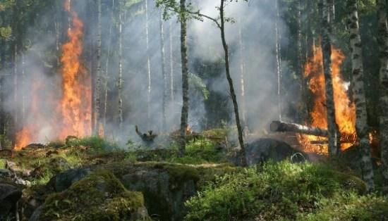 incendi, bosco, car, ricerca