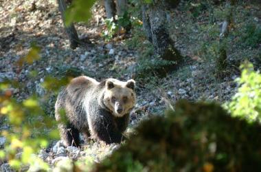 WWF, orso marsicano, Villavallelonga, tutela, Patom