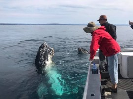 narooma whale watching season