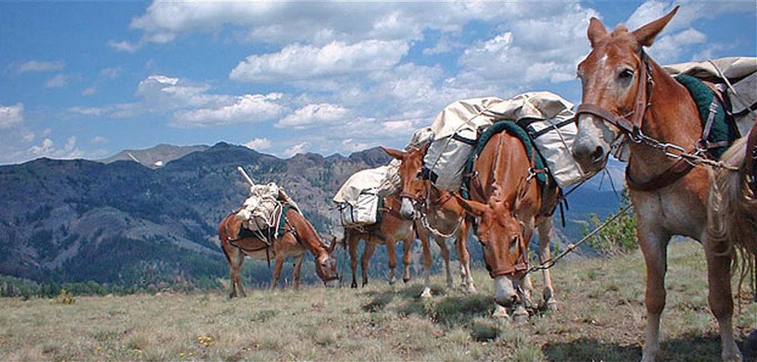 Mule Packstring