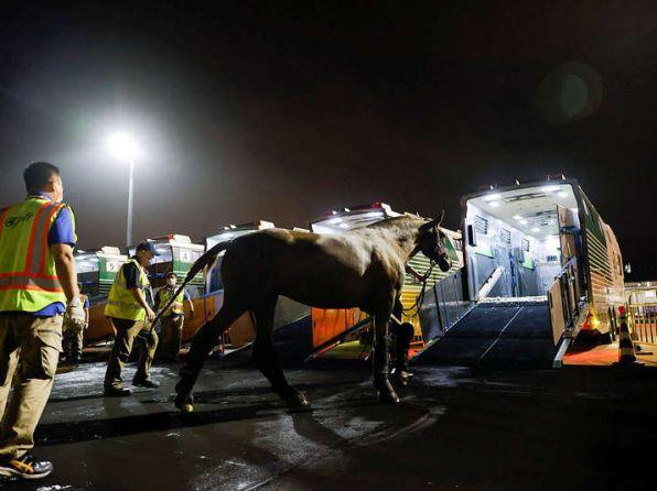 Como vuelan los caballos a Tokio
