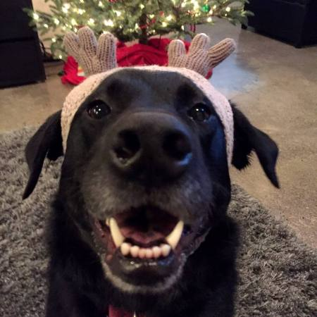 Amp wearing a reindeer hat