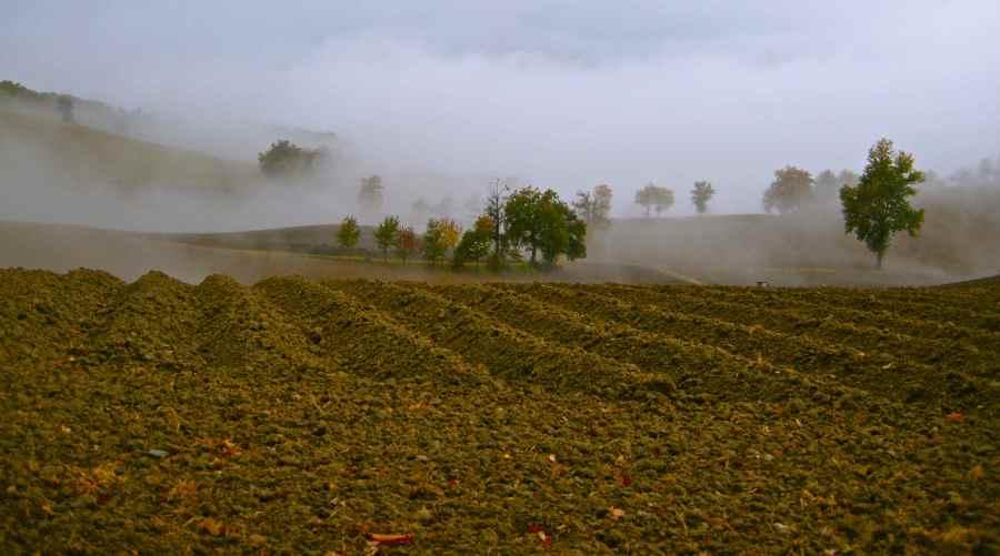 L'arte della nebbia - di Claudio Leoni