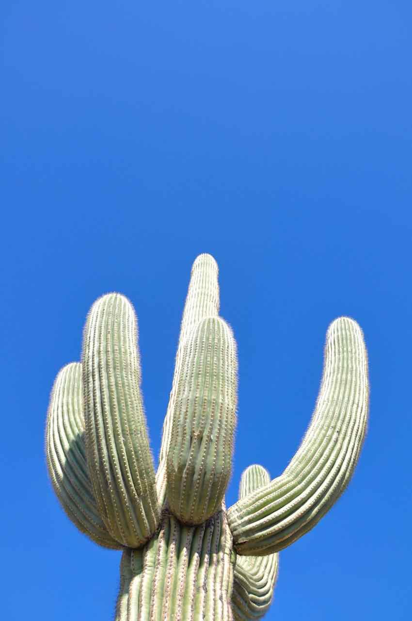 Saguaro National Park - Arizona - di Claudio Leoni