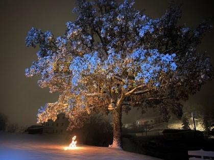 Neve sulla quercia di Montefenaro - di Claudio Leoni
