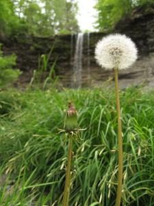 dandelion-falls-2007-05-26-3-05-02-pm