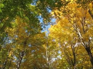 fall-in-jennings-woods-10-20-2007-11-45-55-am