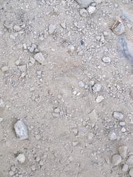 Ocelot (Manigordo) foot prints 4-27-2009 7-30-56 AM.jpg