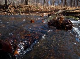 Log Riffle - 11.11.2009 - 10.48.20