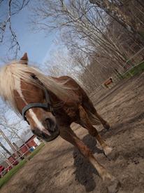 Horses - 04.03.2010 - 08.47.00
