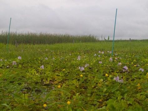 Diversity effects decomposition bundle collection - 07.16.2010 - 07.51.10
