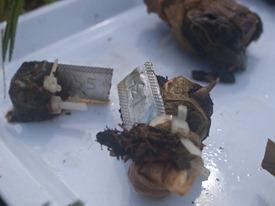 Diversity effects decomposition bundle collection - 07.16.2010 - 08.54.49