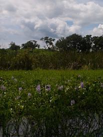 Wetland 2 - 06.30.2010 - 13.24.28