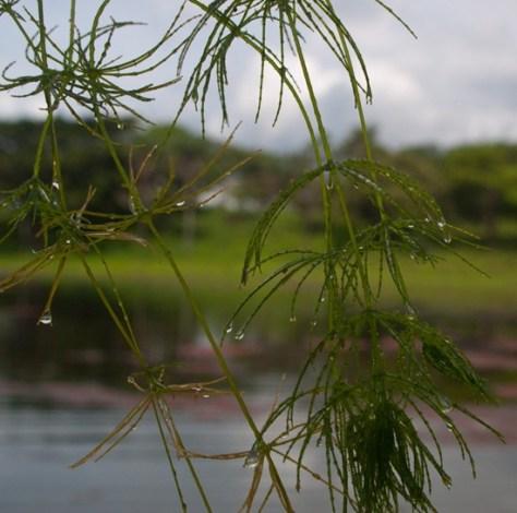 Wetland 3 - 06.30.2010 - 14.46.20