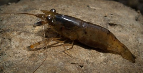 Berried Shrimp - 02.05.2010 - 11.37.34