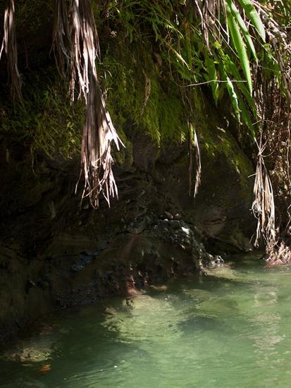 Rio Madrigal - 02.02.2010 - 11.26.36