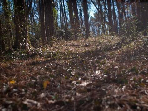 John A White Park - 01.28.2012 - 14.04.06_thumb