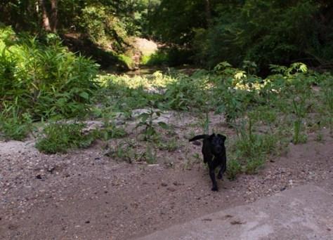 Cascade Springs with Amos - 05.27.2012 - 10.41.37