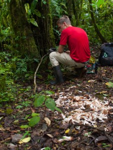 The camera trap failed! But, using radio tracking, Michael found that a scavenger had moved the carcass.