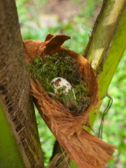 A low nest with egg