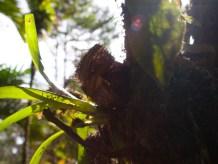 Shana Nest Predation Study - 20130714 - 23