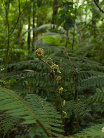 Tree Ferns - 20130707 - 2