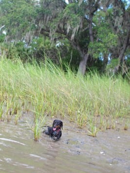Skidaway Island with the Dogs - 08.11.2013 - 14.03.15