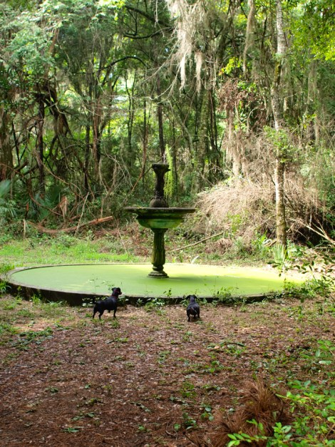Fountain with dogs - 07.20.2014 - 10.27.49