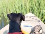 Kayaking with Amos - 08.06.2014 - 17.48.22