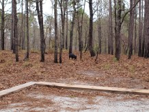 Camping and Kayaking at George Smith State Park - 03.20.2015 - 12.54.00