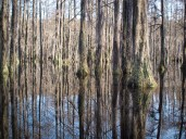 Camping and Kayaking at George Smith State Park - 03.20.2015 - 14.48.18