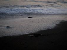 La Leona Station beach - 02.02.2010 - 17.47.32