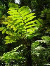 Tree ferns - 07.04.2015 - 12.25.22