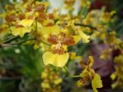 Green house flowers - 05.20.2016 - 12.26.32