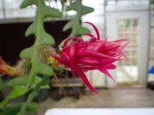 Green house flowers - 05.20.2016 - 12.30.55