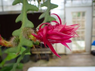 Green house flowers - 05.20.2016 - 12.30.55