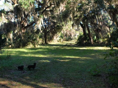 Harris Neck with Dogs - 11.24.2013 - 13.43.55