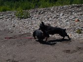 Letchworth State Park with the dogs - 06.04.2013 - 14.32.34