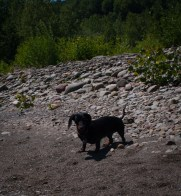 Letchworth State Park with the dogs - 06.04.2013 - 14.32.44