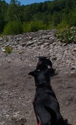 Letchworth State Park with the dogs - 06.04.2013 - 14.32.46