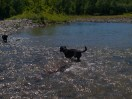 Letchworth State Park with the dogs - 06.04.2013 - 14.40.54