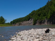 Letchworth State Park with the dogs - 06.04.2013 - 14.41.59